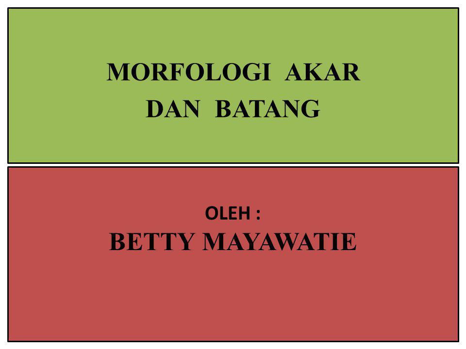 MORFOLOGI AKAR DAN BATANG OLEH : BETTY MAYAWATIE