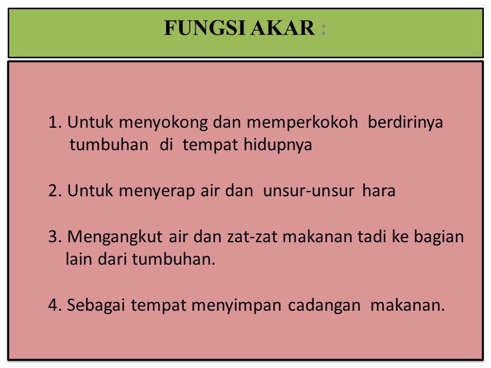 FUNGSI AKAR :