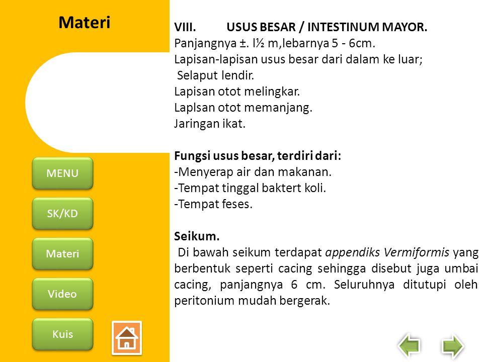 Materi VIII. USUS BESAR / INTESTINUM MAYOR.