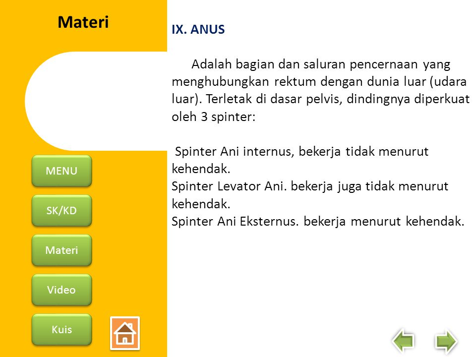 IX. ANUS