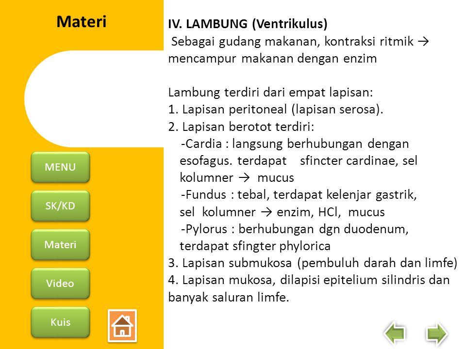 Materi IV. LAMBUNG (Ventrikulus)