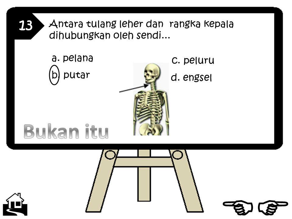 13 Antara tulang leher dan rangka kepala dihubungkan oleh sendi... a. pelana. c. peluru. b. putar.