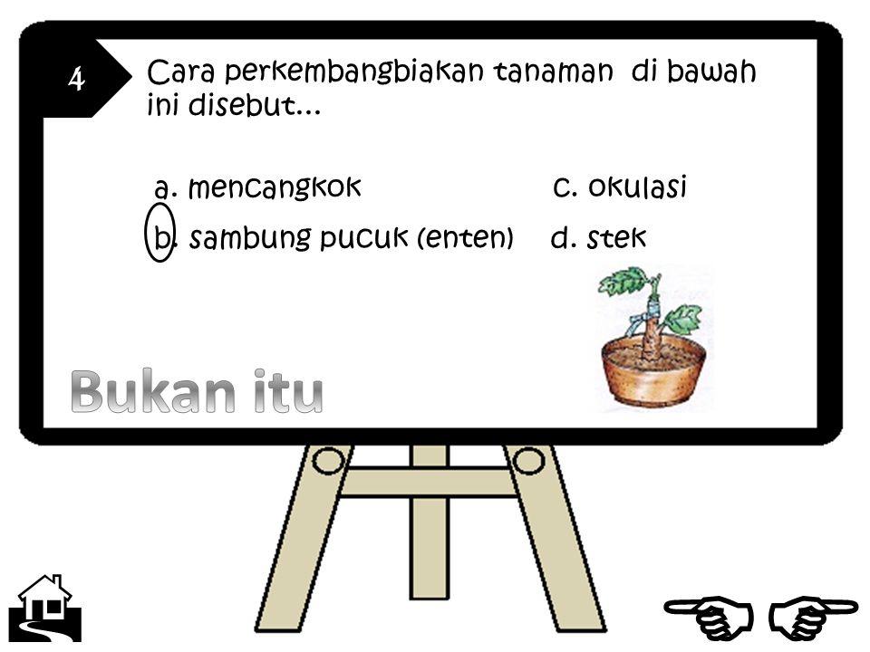 4 Cara perkembangbiakan tanaman di bawah ini disebut... a. mencangkok. c. okulasi. b. sambung pucuk (enten)