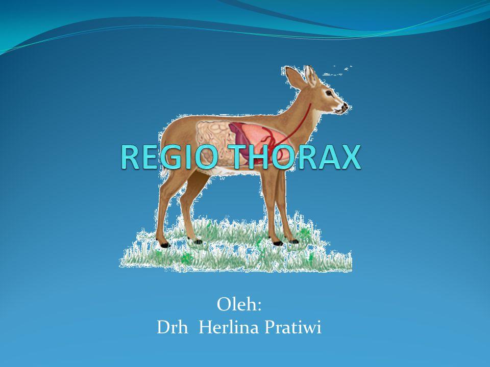 Oleh: Drh Herlina Pratiwi