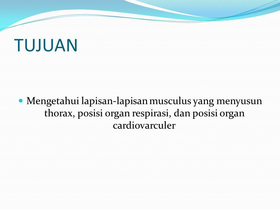 TUJUAN Mengetahui lapisan-lapisan musculus yang menyusun thorax, posisi organ respirasi, dan posisi organ cardiovarculer.