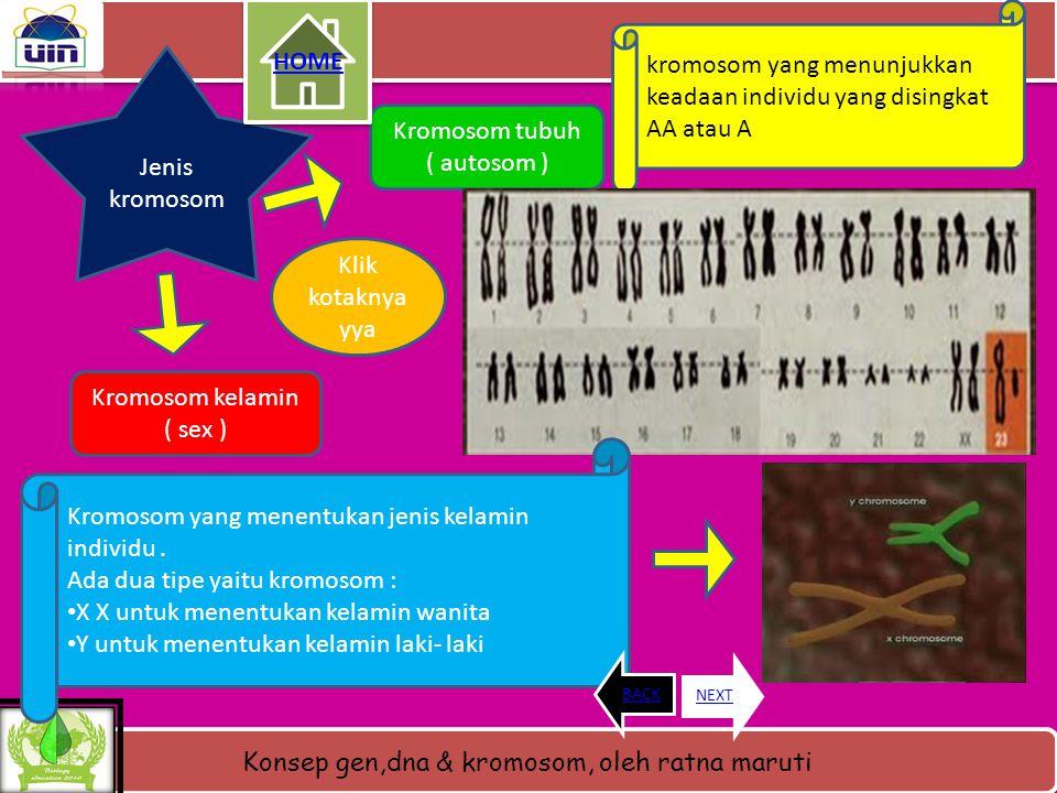 kromosom yang menunjukkan keadaan individu yang disingkat AA atau A