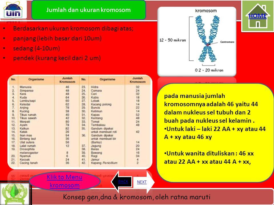 Jumlah dan ukuran kromosom