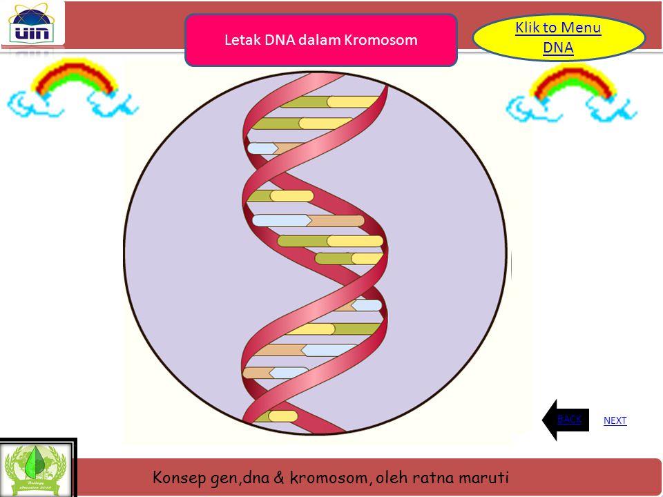 Letak DNA dalam Kromosom