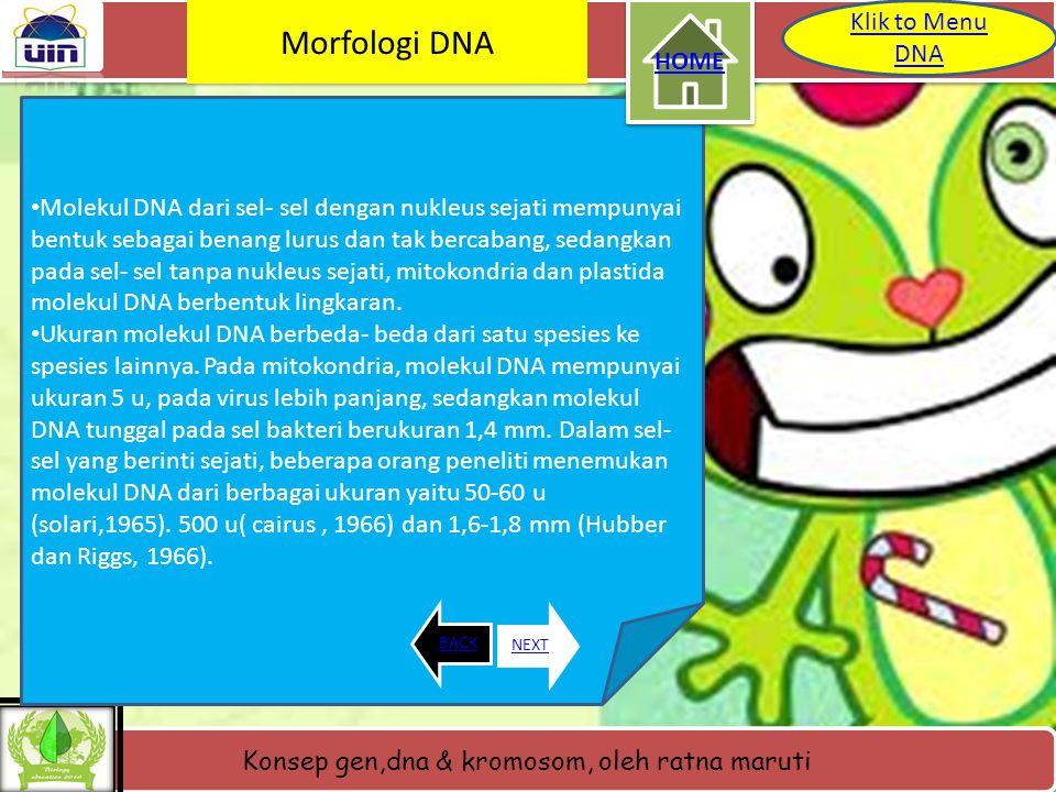 Morfologi DNA Klik to Menu DNA HOME