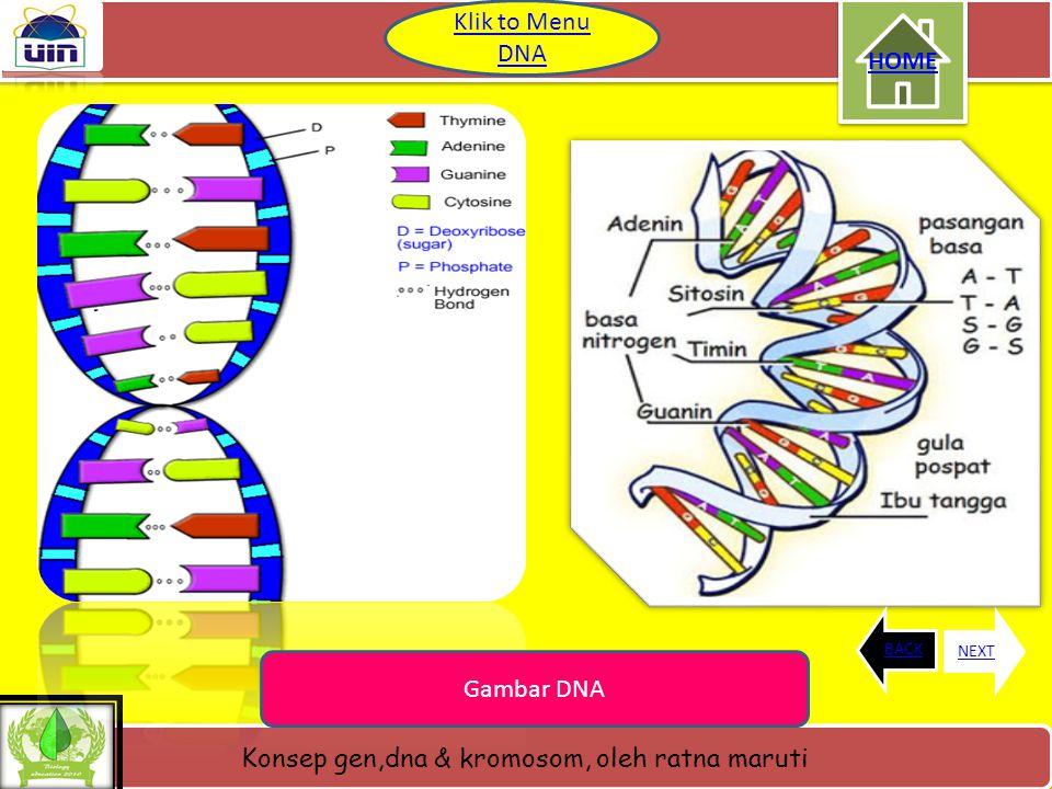 Klik to Menu DNA HOME BACK NEXT Gambar DNA
