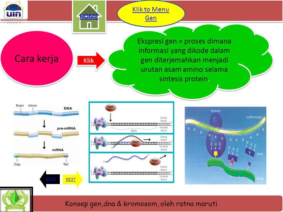 HOME Klik to Menu Gen. Ekspresi gen = proses dimana informasi yang dikode dalam gen diterjemahkan menjadi urutan asam amino selama sintesis protein.