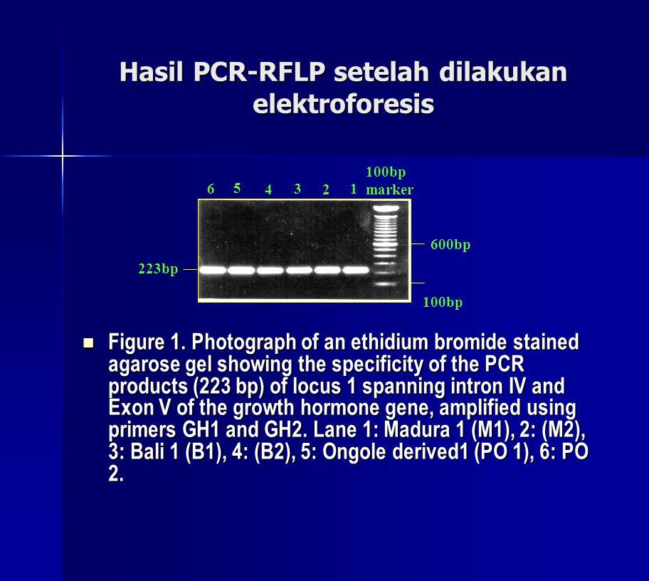 Hasil PCR-RFLP setelah dilakukan elektroforesis