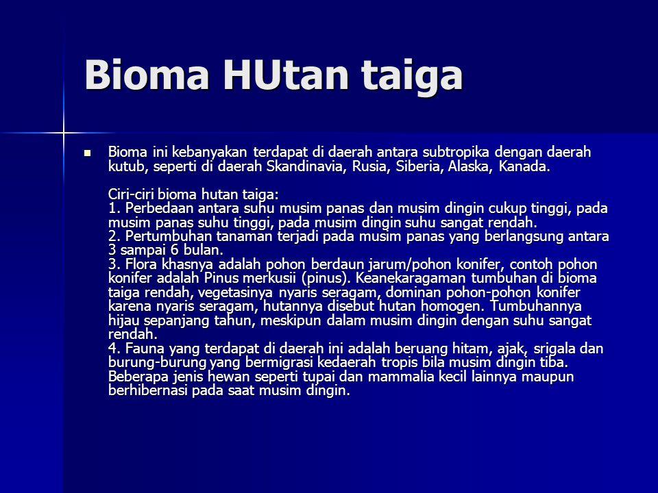 Bioma HUtan taiga