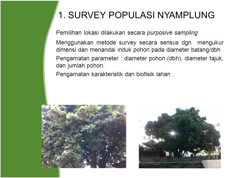 1. SURVEY POPULASI NYAMPLUNG