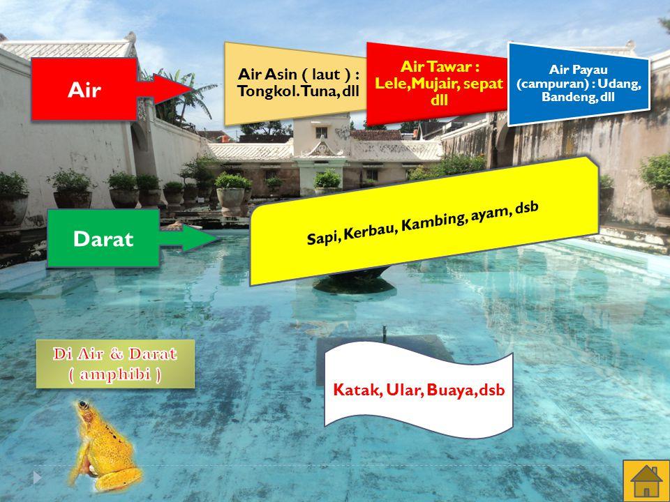 Air Darat Sapi, Kerbau, Kambing, ayam, dsb Di Air & Darat ( amphibi )