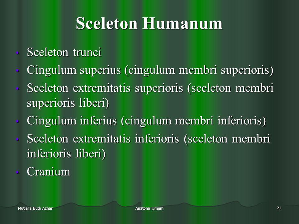 Sceleton Humanum Sceleton trunci