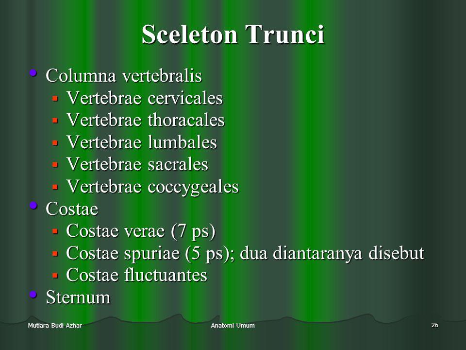 Sceleton Trunci Columna vertebralis Vertebrae cervicales