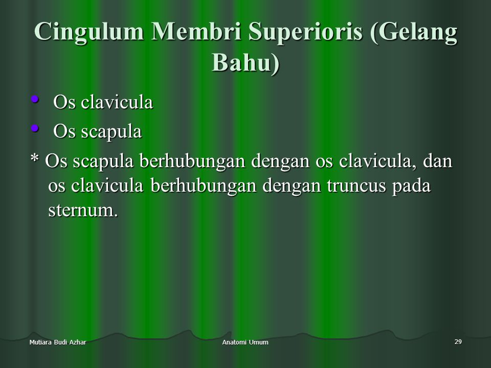 Cingulum Membri Superioris (Gelang Bahu)