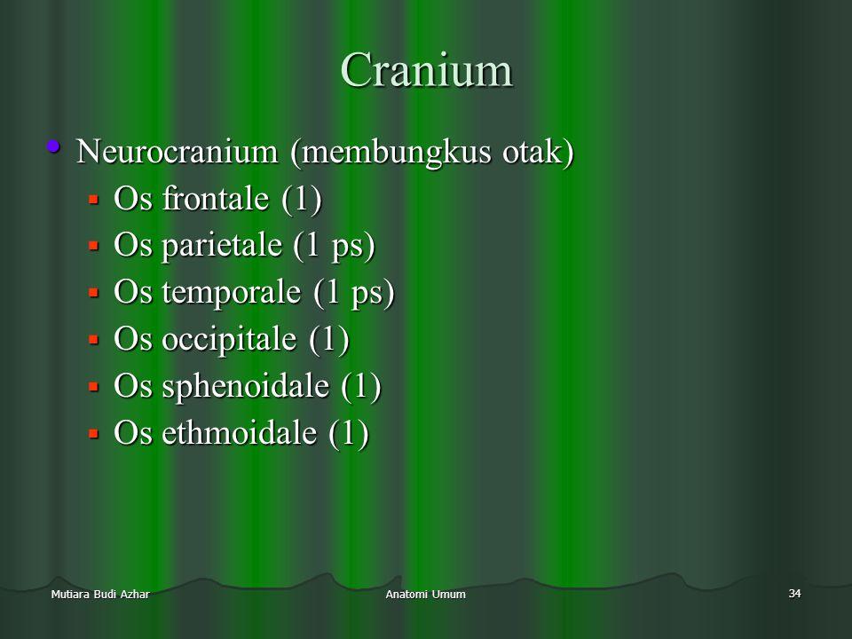 Cranium Neurocranium (membungkus otak) Os frontale (1)
