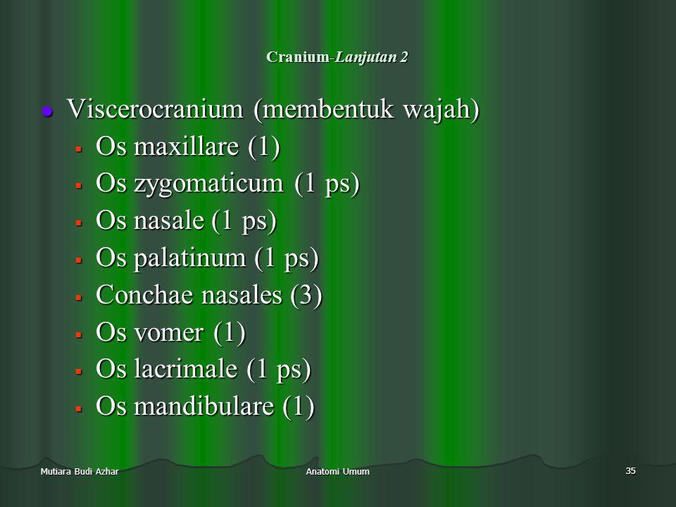 Viscerocranium (membentuk wajah) Os maxillare (1)