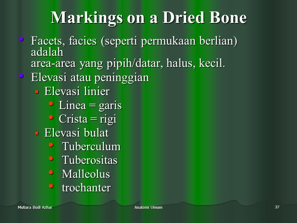 Markings on a Dried Bone