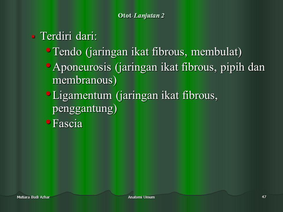 Tendo (jaringan ikat fibrous, membulat)