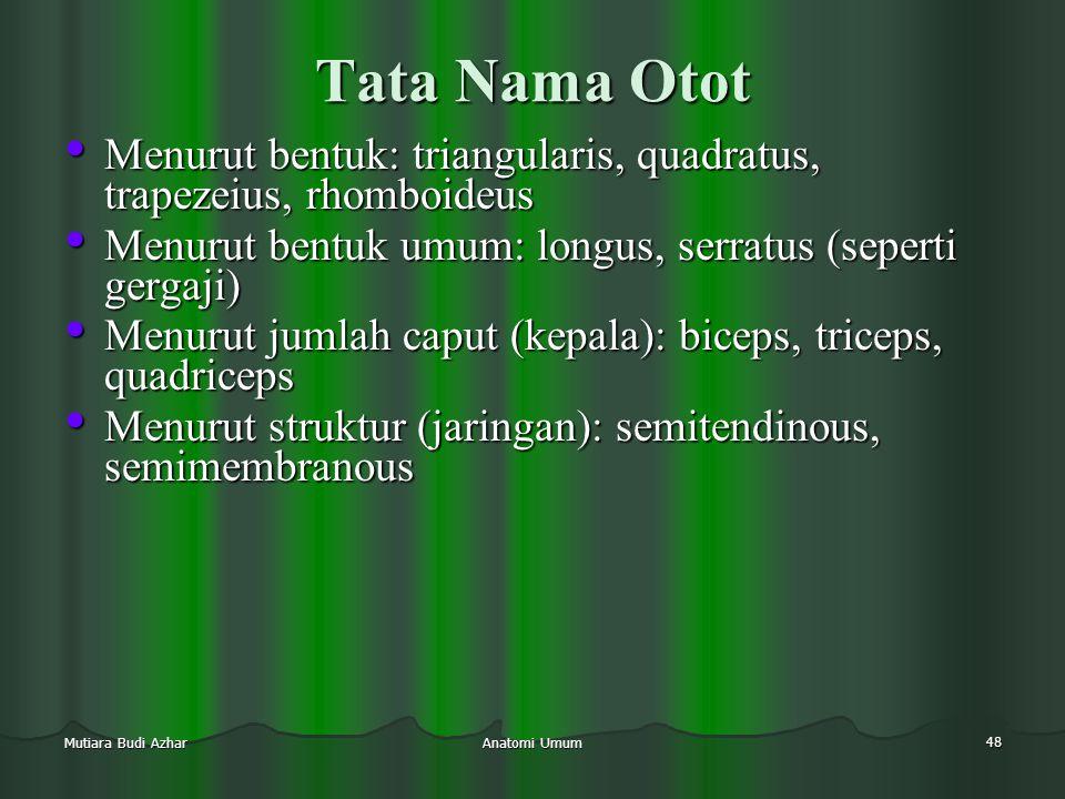 Tata Nama Otot Menurut bentuk: triangularis, quadratus, trapezeius, rhomboideus. Menurut bentuk umum: longus, serratus (seperti gergaji)