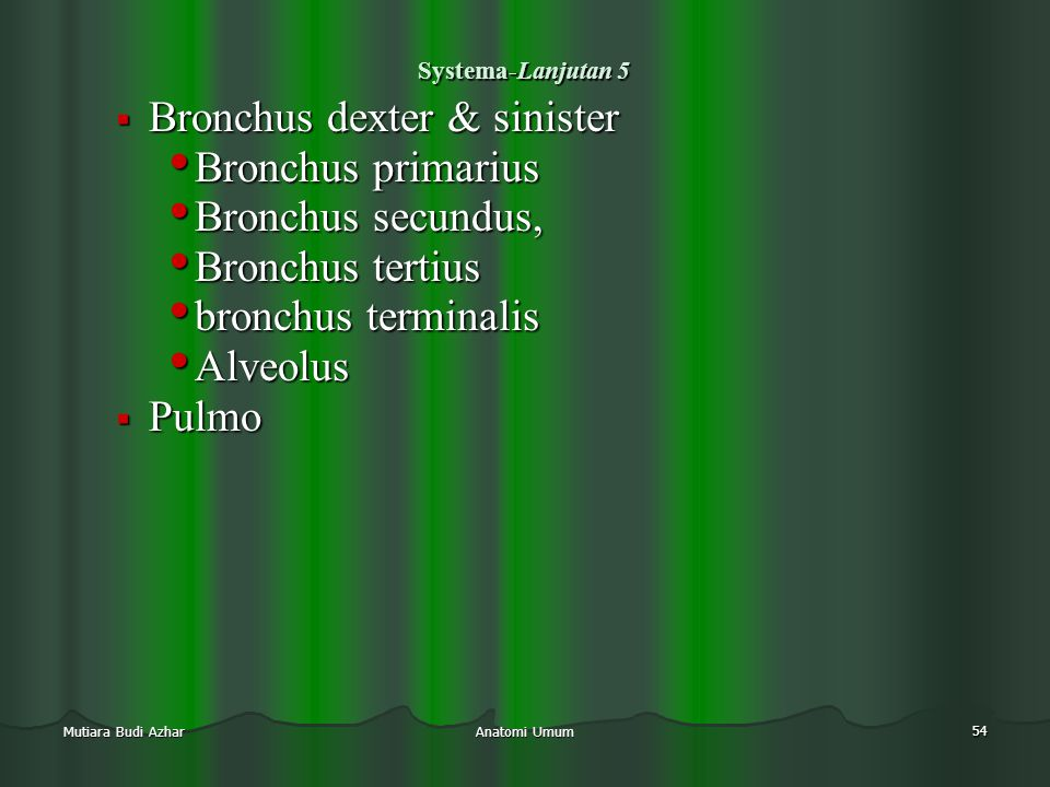 Bronchus dexter & sinister Bronchus primarius Bronchus secundus,