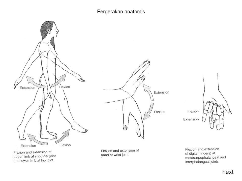 Pergerakan anatomis next