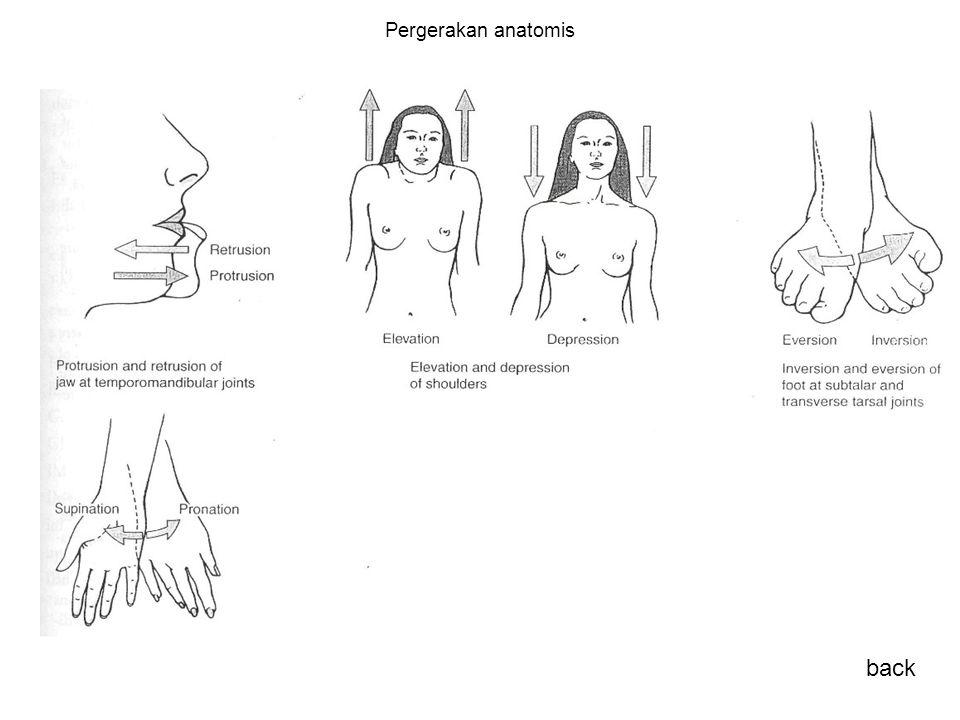 Pergerakan anatomis back