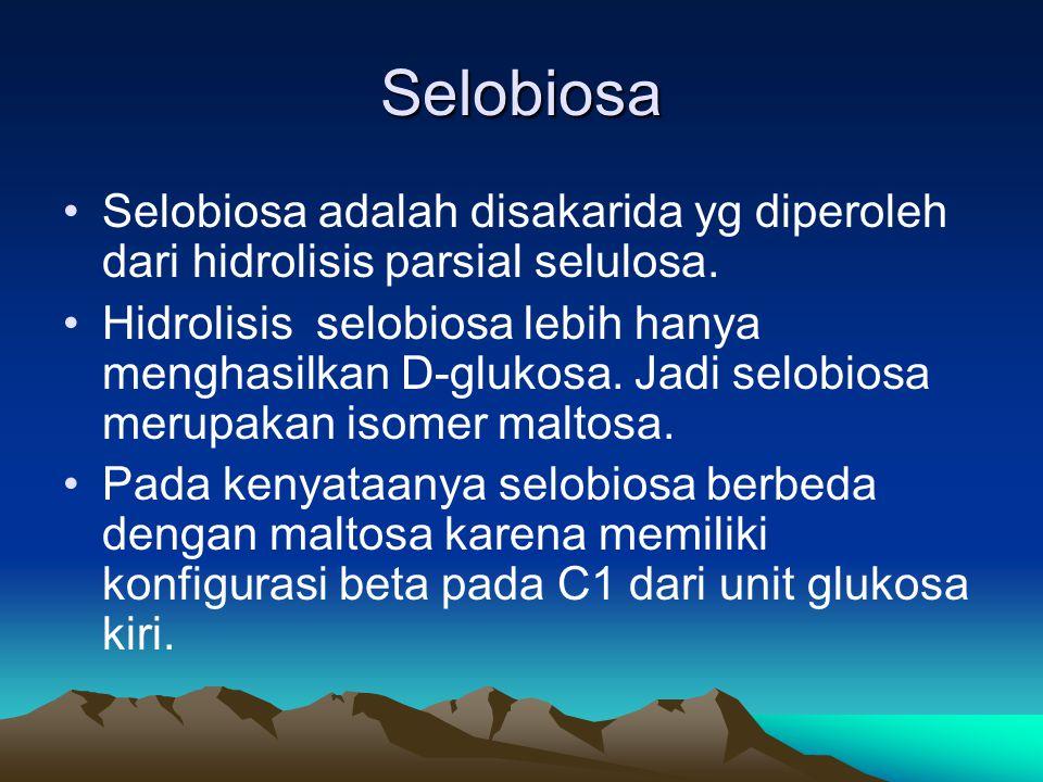 Selobiosa Selobiosa adalah disakarida yg diperoleh dari hidrolisis parsial selulosa.
