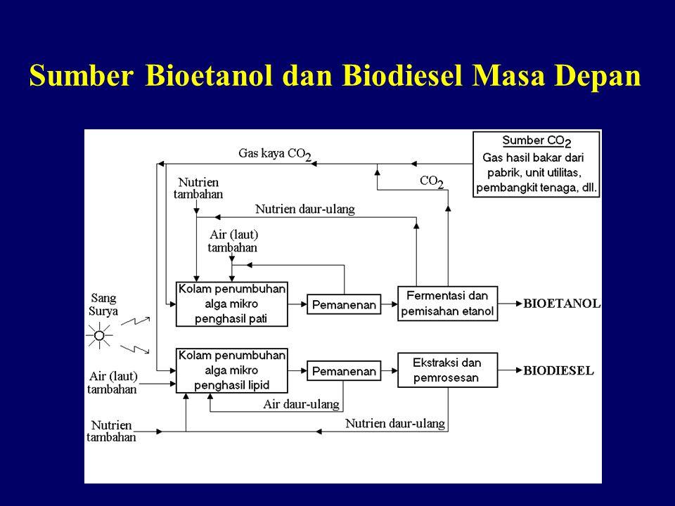 Sumber Bioetanol dan Biodiesel Masa Depan