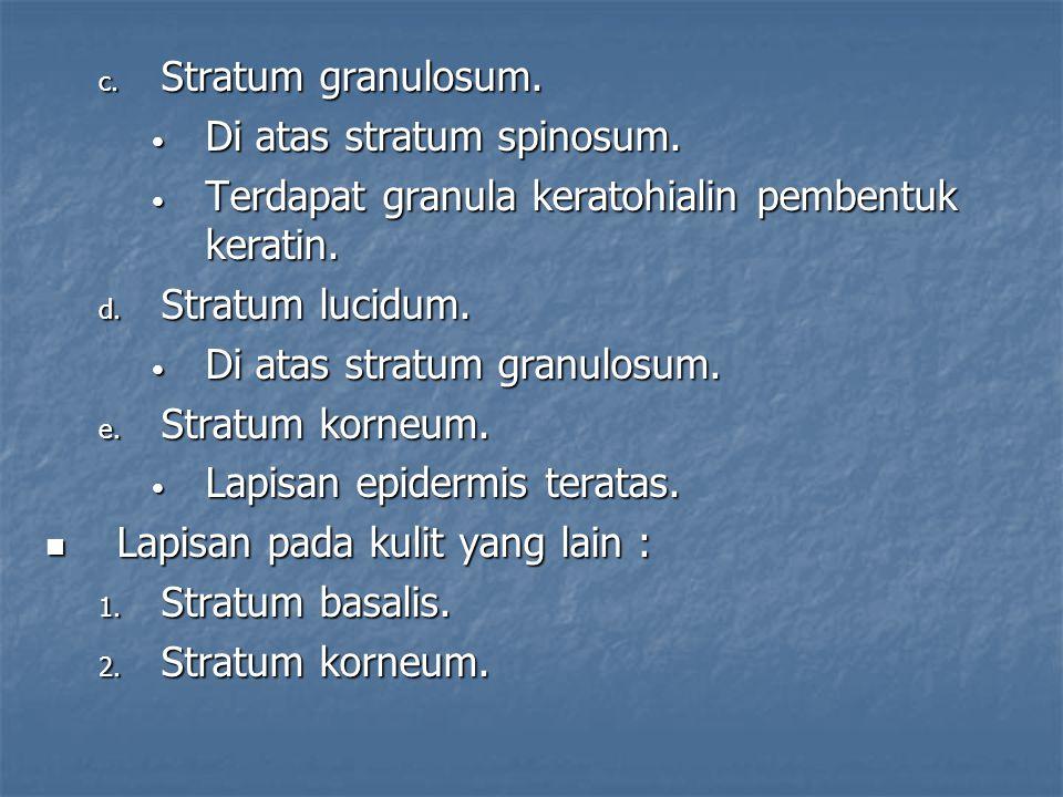 Stratum granulosum. Di atas stratum spinosum. Terdapat granula keratohialin pembentuk keratin. Stratum lucidum.