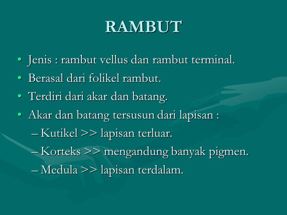 RAMBUT Jenis : rambut vellus dan rambut terminal.