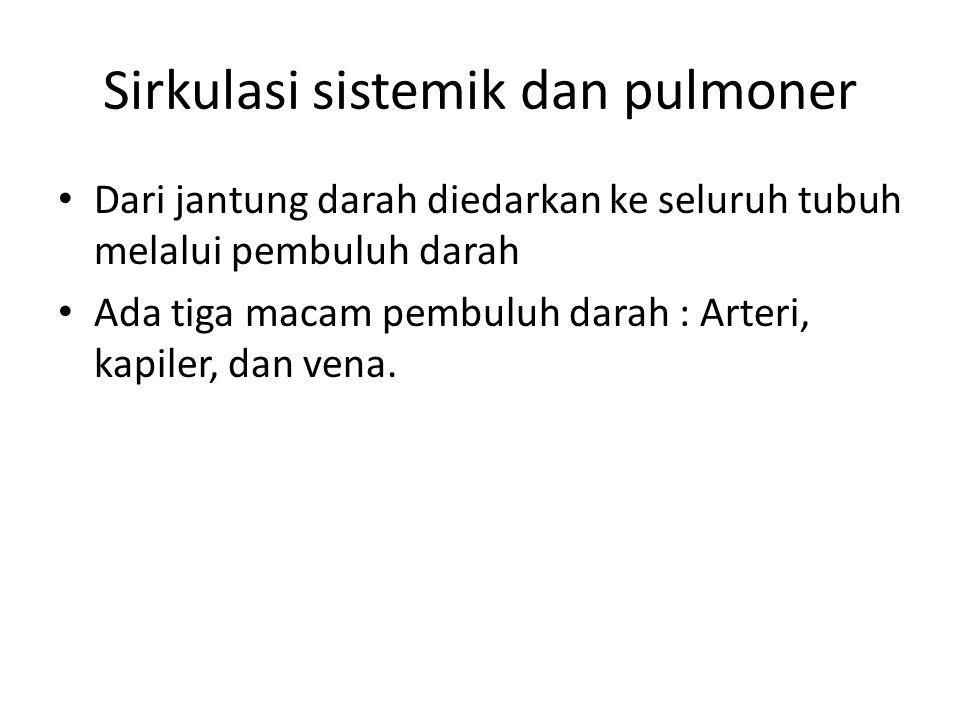 Sirkulasi sistemik dan pulmoner