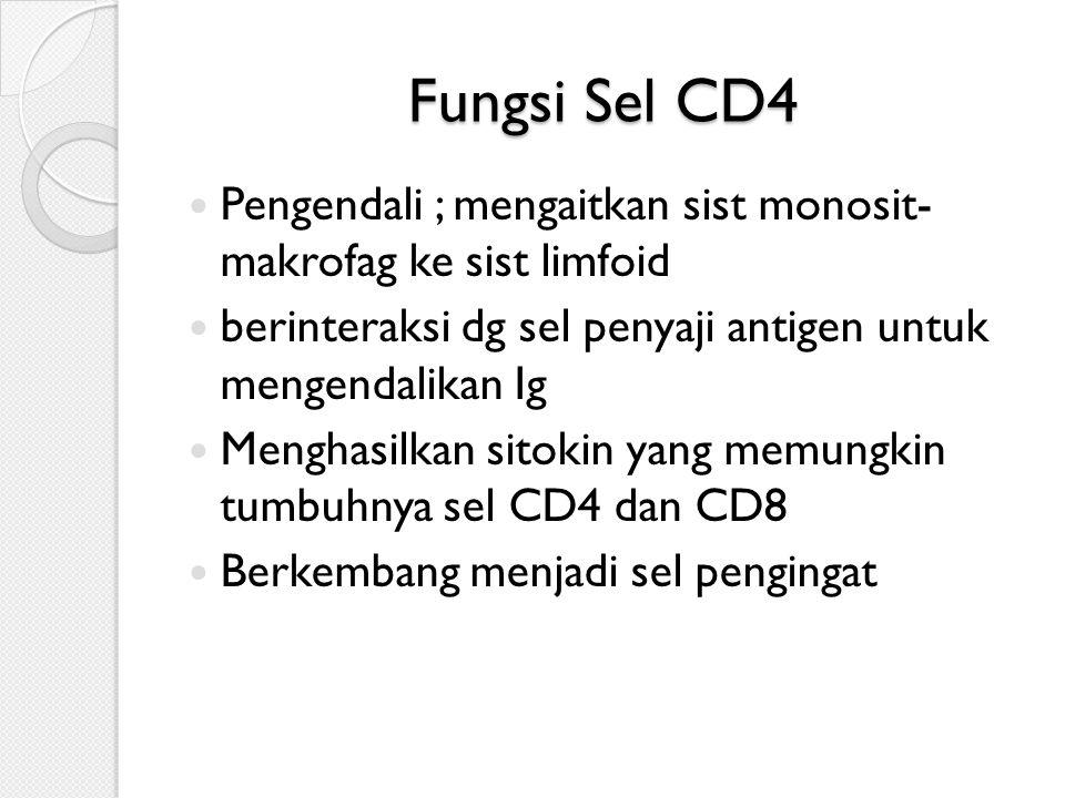 Fungsi Sel CD4 Pengendali ; mengaitkan sist monosit- makrofag ke sist limfoid. berinteraksi dg sel penyaji antigen untuk mengendalikan Ig.