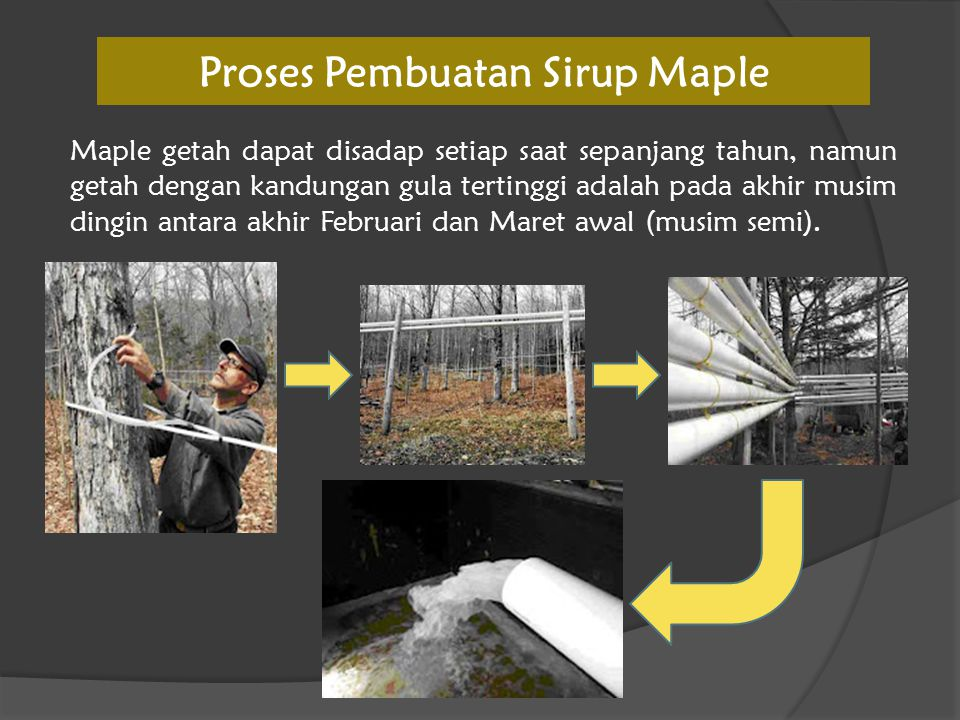 Proses Pembuatan Sirup Maple