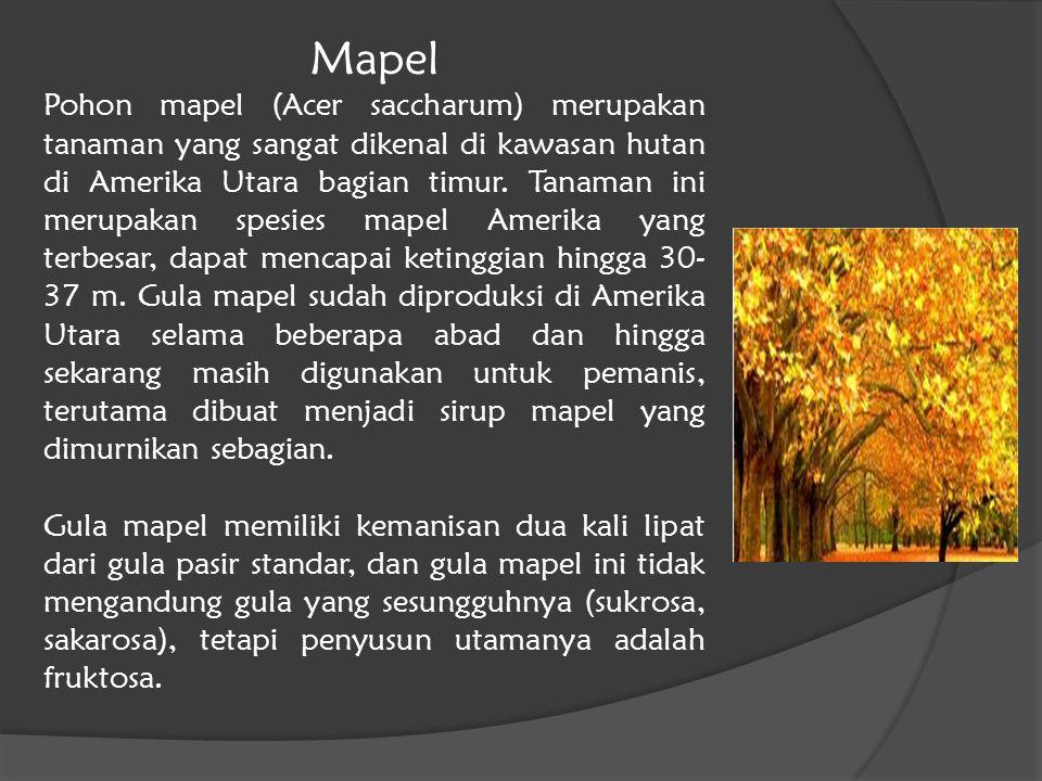 Mapel