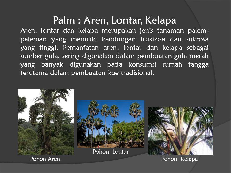 Palm : Aren, Lontar, Kelapa
