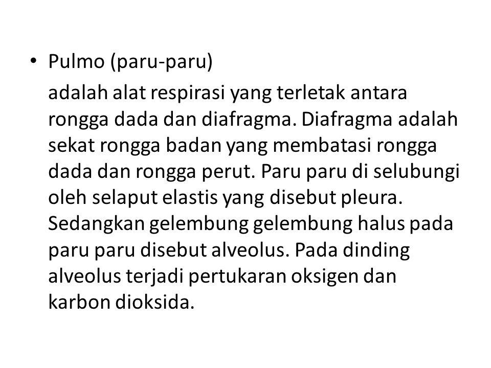 Pulmo (paru-paru)