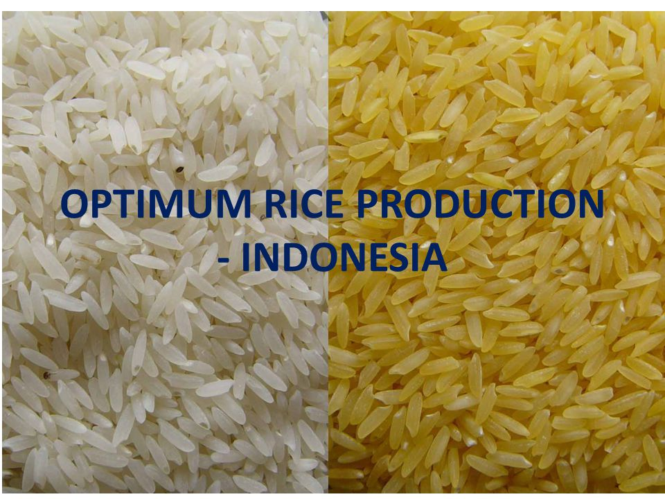 OPTIMUM RICE PRODUCTION - INDONESIA