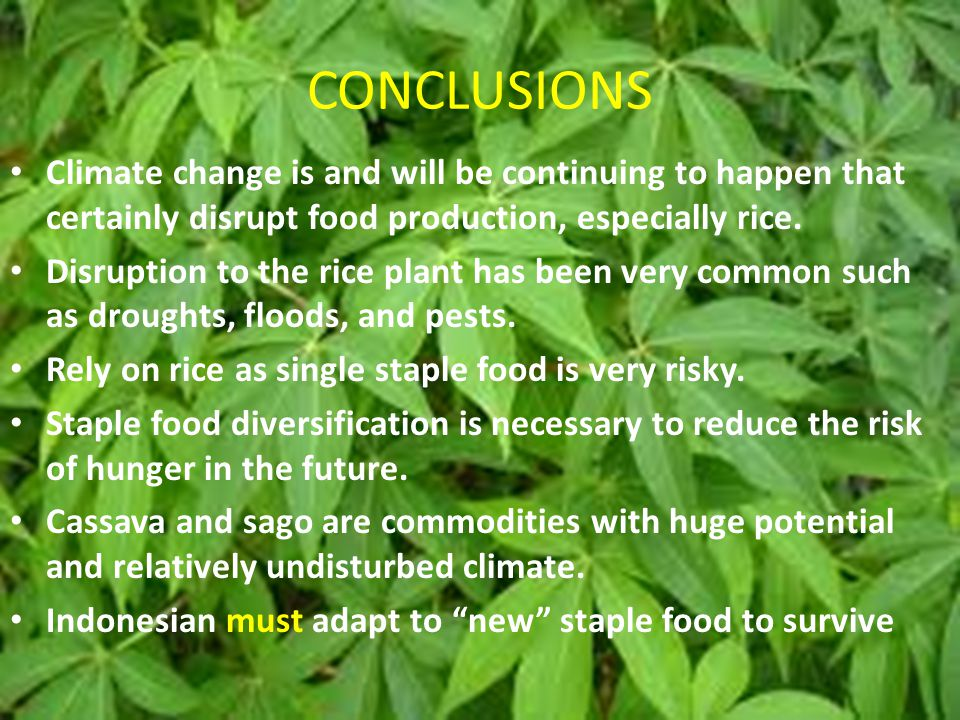 CONCLUSIONS Climate change is and will be continuing to happen that certainly disrupt food production, especially rice.