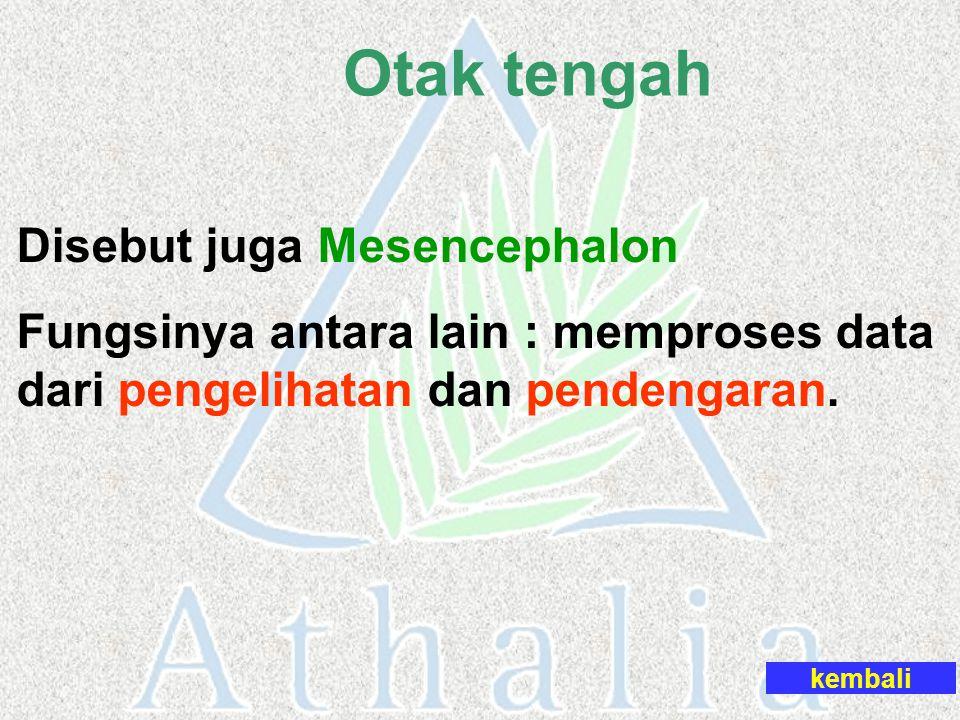 Otak tengah Disebut juga Mesencephalon