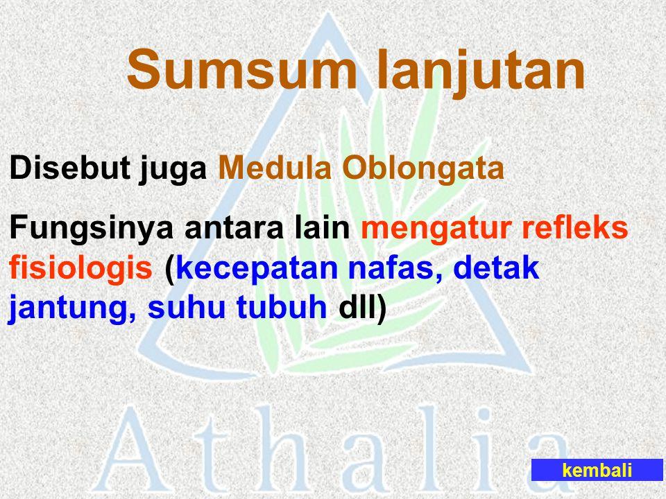 Sumsum lanjutan Disebut juga Medula Oblongata