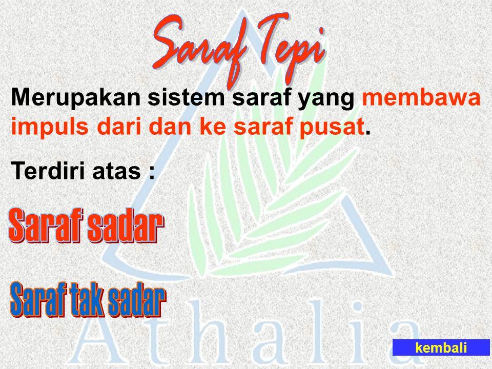 Saraf Tepi Saraf sadar Saraf tak sadar