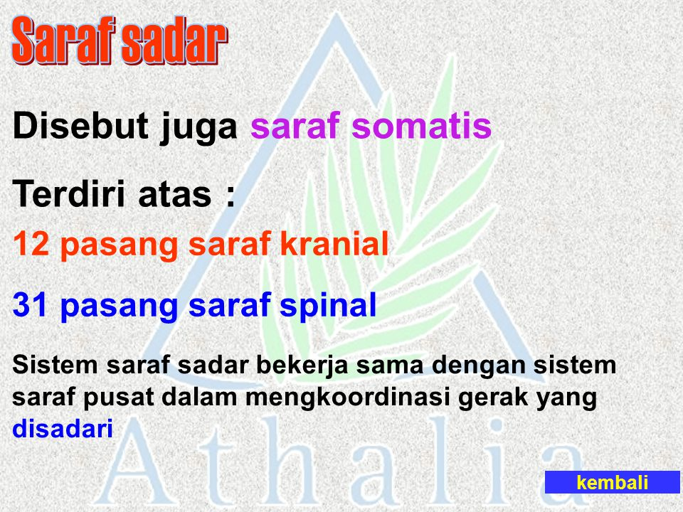 Saraf sadar Disebut juga saraf somatis Terdiri atas :