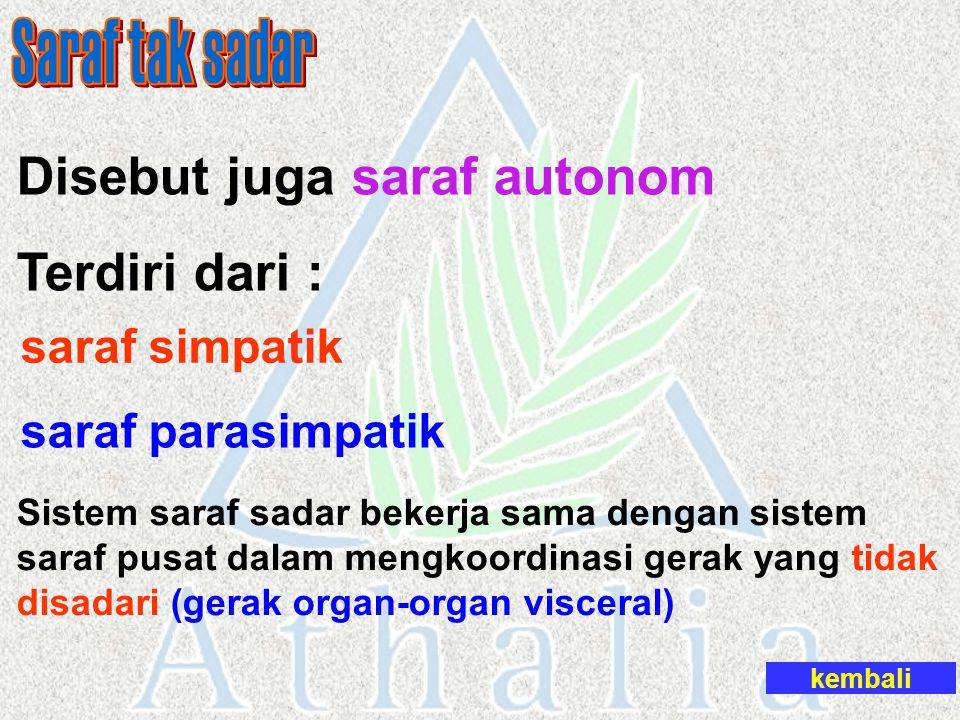 Saraf tak sadar Disebut juga saraf autonom Terdiri dari :