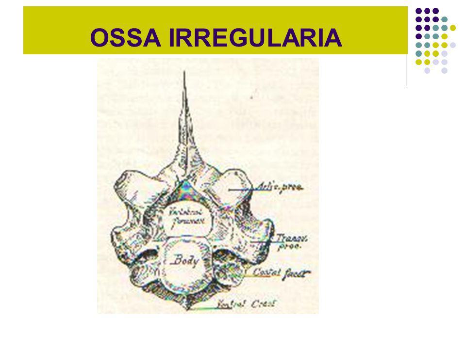 OSSA IRREGULARIA
