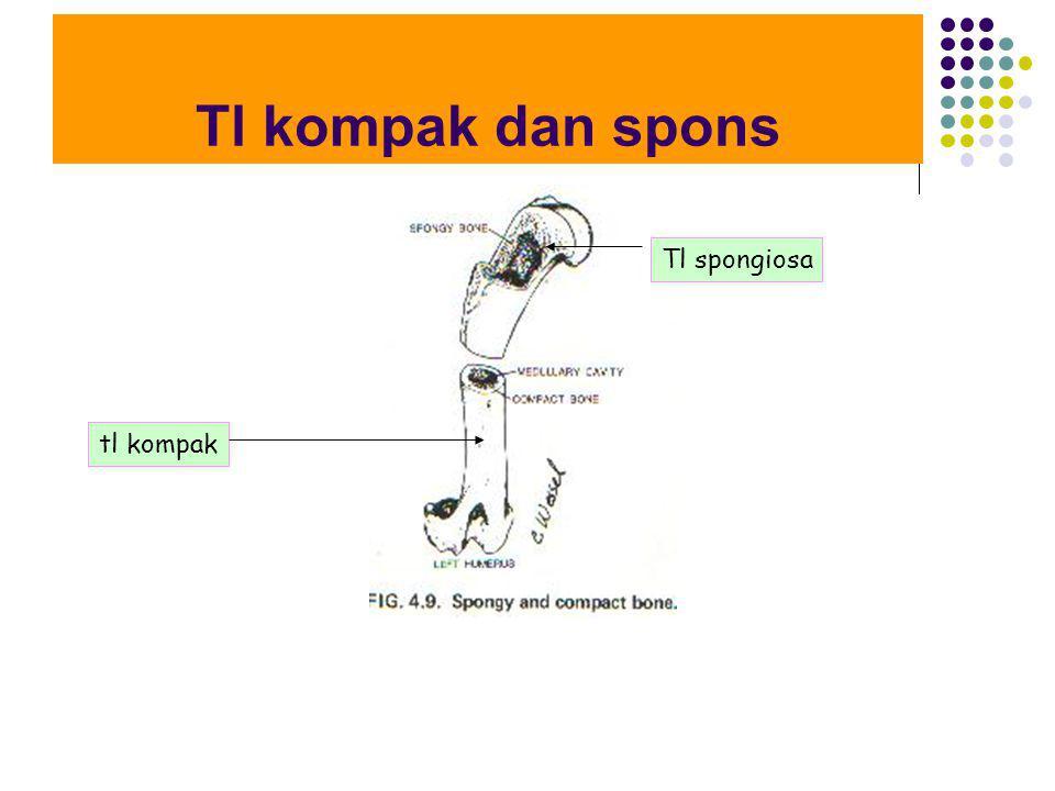 Tl kompak dan spons Tl spongiosa tl kompak