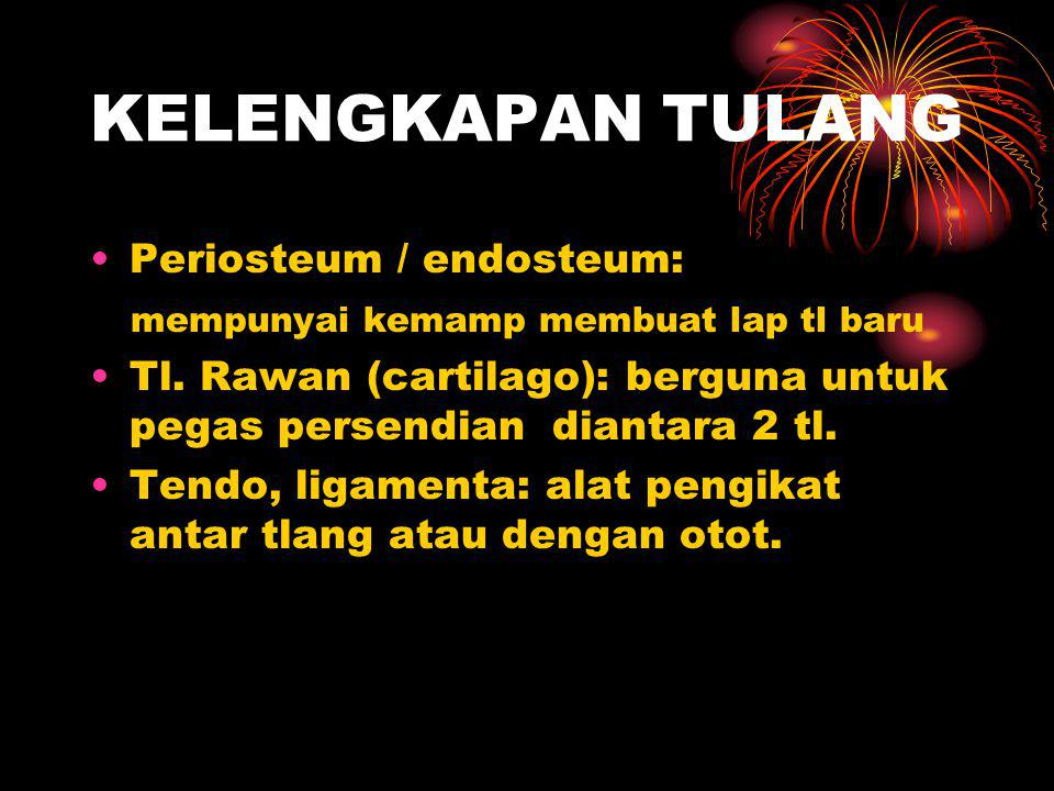 KELENGKAPAN TULANG Periosteum / endosteum: